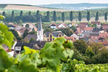 1806heimersheim-weingut-lawall-stoehr